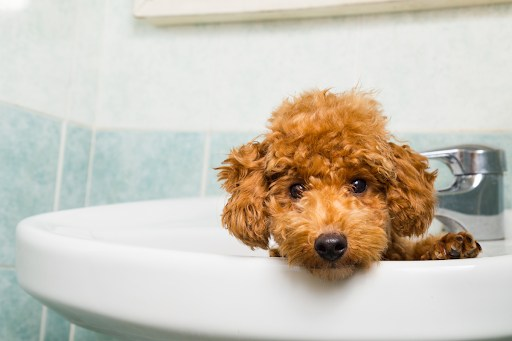 Puppy in a bathroom sink.